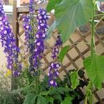 Blütenpracht auf der Terrasse
